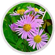 New York Asters In Flower's Cove-newfoundland Round Beach Towel