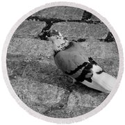 New York City Pigeon In Black And White Round Beach Towel