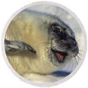 Newborn Gray Seal Pup Halichoerus Round Beach Towel