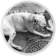 Newsworthy Dog In French Quarter Black And White Round Beach Towel