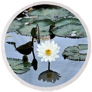 #night Blooming Water Lily Round Beach Towel