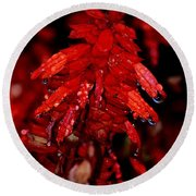 Night Of Glistening Red Salvia Round Beach Towel