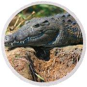 Nile Crocodile Round Beach Towel