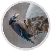 Blue Jay Finds A Peanut Round Beach Towel