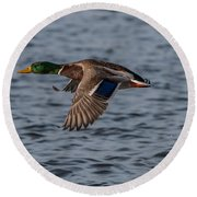 Mallard Flight Round Beach Towel