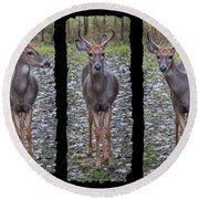 Curious Yearling Deer Round Beach Towel