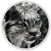 North American Lynx In The Wild. Round Beach Towel