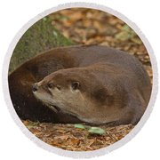 North American River Otter Round Beach Towel