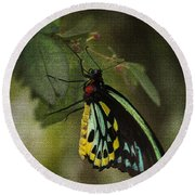Northern Butterfly Round Beach Towel
