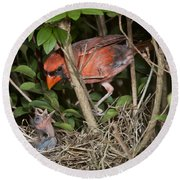 Northern Cardinal At Nest Round Beach Towel