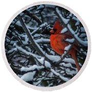 Northern Cardinal In Winter Round Beach Towel