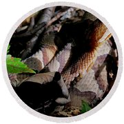 Northern Copperhead Round Beach Towel