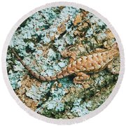 Northern Fence Lizard Round Beach Towel