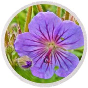 Northern Geranium By Transfiguration Of Our Lord Russian Orthodox Church In Ninilchik-ak Round Beach Towel