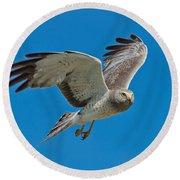 Northern Harrier Male In Flight Round Beach Towel