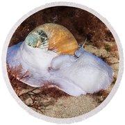 Northern Moon Snail Round Beach Towel