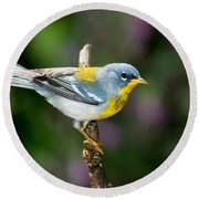 Northern Parula Warbler Round Beach Towel