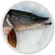 Northern Pike Fish On Snow, Close Round Beach Towel