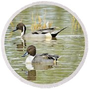 Northern Pintail Ducks  Round Beach Towel