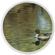 Northern Pintail In A Quiet Pond California Wildlife Round Beach Towel