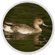 Northern Pintail Molting Round Beach Towel
