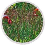 Northern Pitcher Plant In French Mountain Bog On Cape Breton Isl Round Beach Towel