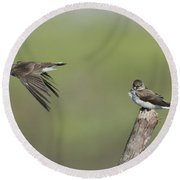Northern Rough-winged Swallows Round Beach Towel