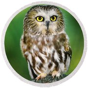 Northern Saw-whet Owl Aegolius Acadicus Wildlife Rescue Round Beach Towel