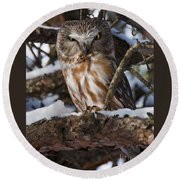 Northern Saw-whet Owl.. Round Beach Towel
