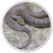 Northern Water Snake Round Beach Towel