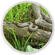 Northern Water Snake - Nerodia Sipedon Round Beach Towel