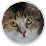 Nosey Lil Kitty Round Beach Towel