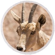 Nubian Ibex Capra Ibex Nubiana 1 Round Beach Towel