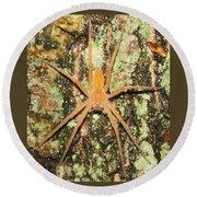 Nursery Web Spider Round Beach Towel