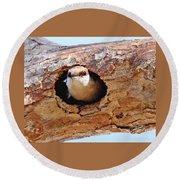 Nuthatch Bird In Nest Round Beach Towel