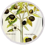 Nutmeg Plant Botanical Round Beach Towel