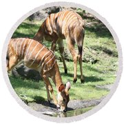 Nyalas At The Watering Hole Round Beach Towel