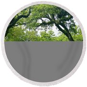 Oak Alley Trees Round Beach Towel