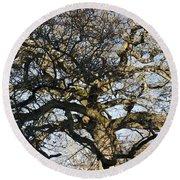 Oak Tree In Winter Round Beach Towel