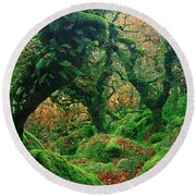 Oak Trees In A Forest, Wistmans Wood Round Beach Towel