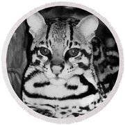 Ocelot In Repose Round Beach Towel