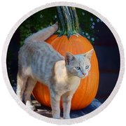 October Kitten #1 Round Beach Towel