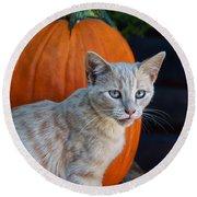 October Kitten #3 Round Beach Towel