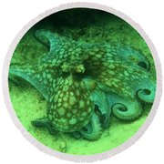 Octopus In The Sand Round Beach Towel
