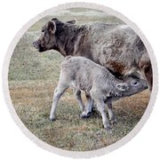 Oil Paint Look Cow And Calf Portrait Usa Round Beach Towel