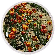 Oil Painting - Red And Yellow Tulips Inside The Tulip Garden In Srinagar Round Beach Towel