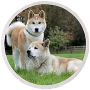 Old And Young Akita Inu Round Beach Towel