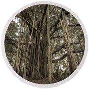 Old Banyan Tree Round Beach Towel by Adam Romanowicz