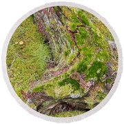 Old Decaying Lichens Moss Covered Taiga Tree Trunk Round Beach Towel