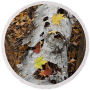 Old Fallen Birch Round Beach Towel